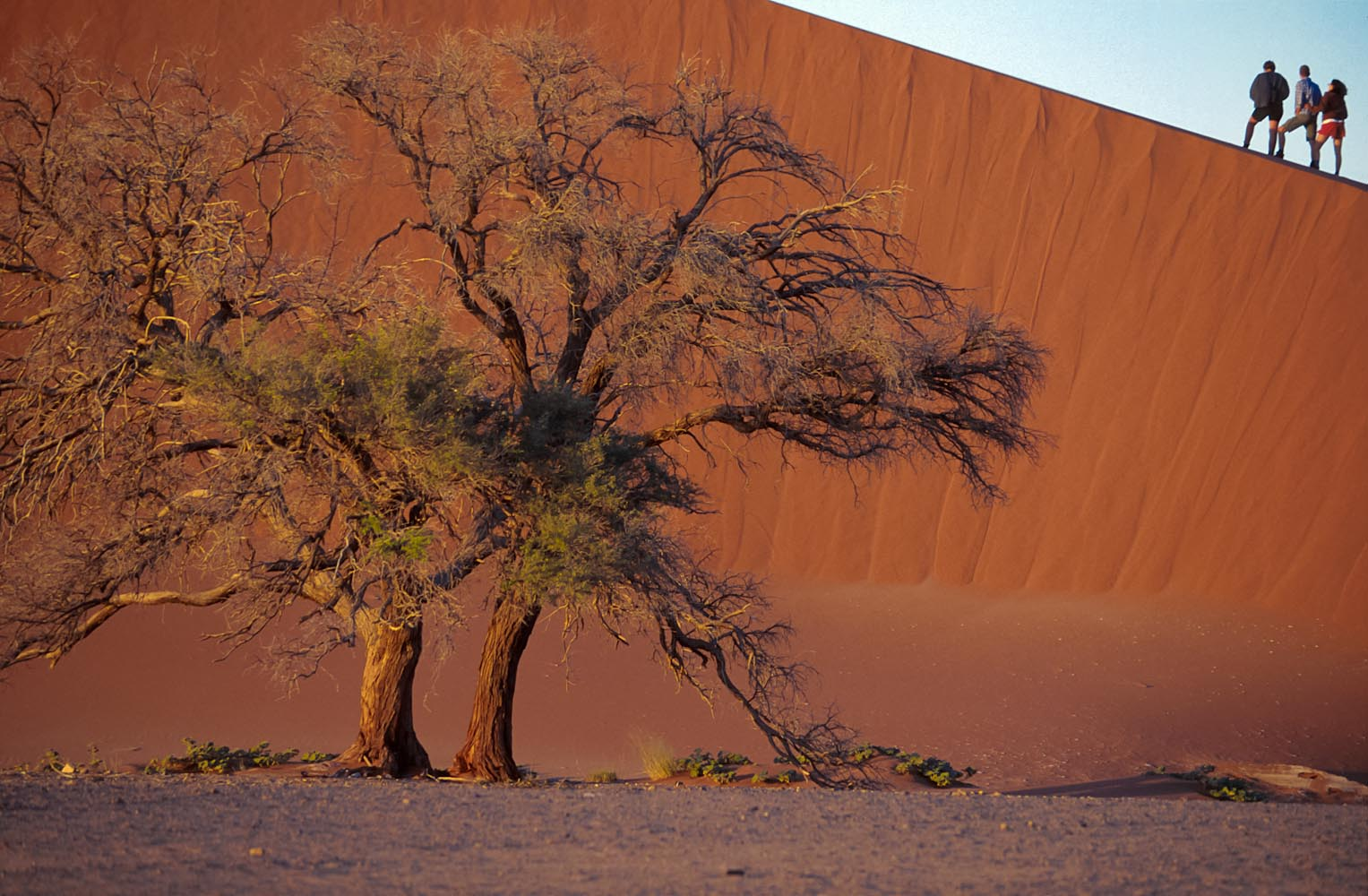 (c) Charles Sturge photographer - The Namib, oldest desert in the world, Namibia